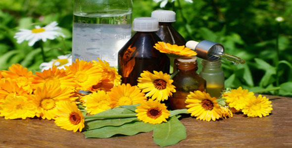 Studying Tips – Herbal Remedies For Better Memory