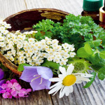 Effective Natural Remedies For Hyperactivity – Eight Calming Herbs